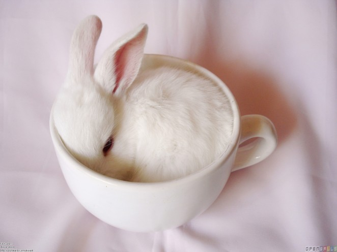 white_bunny_in_a_cup_1600x1200